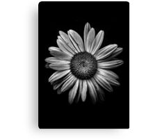 Backyard Flowers In Black And White 13 Canvas Print