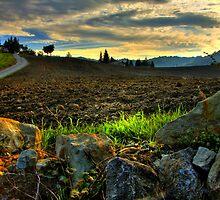 Tramonto, campo arato con sassi ed erba - Montecorone - ( zocca modena italy ) by primo masotti