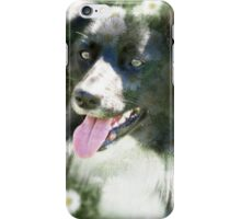 Border Collie Among Daisies iPhone Case/Skin