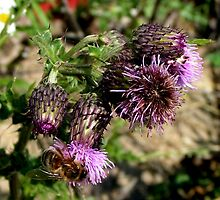 Thistle and bee don't worry no pricks by patjila