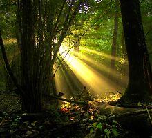Raggi di luce nel bosco - Missano - (zocca modena italy ) __4271_  by primo masotti