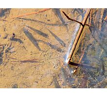 Little Swamp Fish Photographic Print