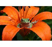 """lily"" pad Photographic Print"