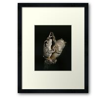 Shall We Dance? Framed Print