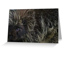 """My"" Porcupine Greeting Card"