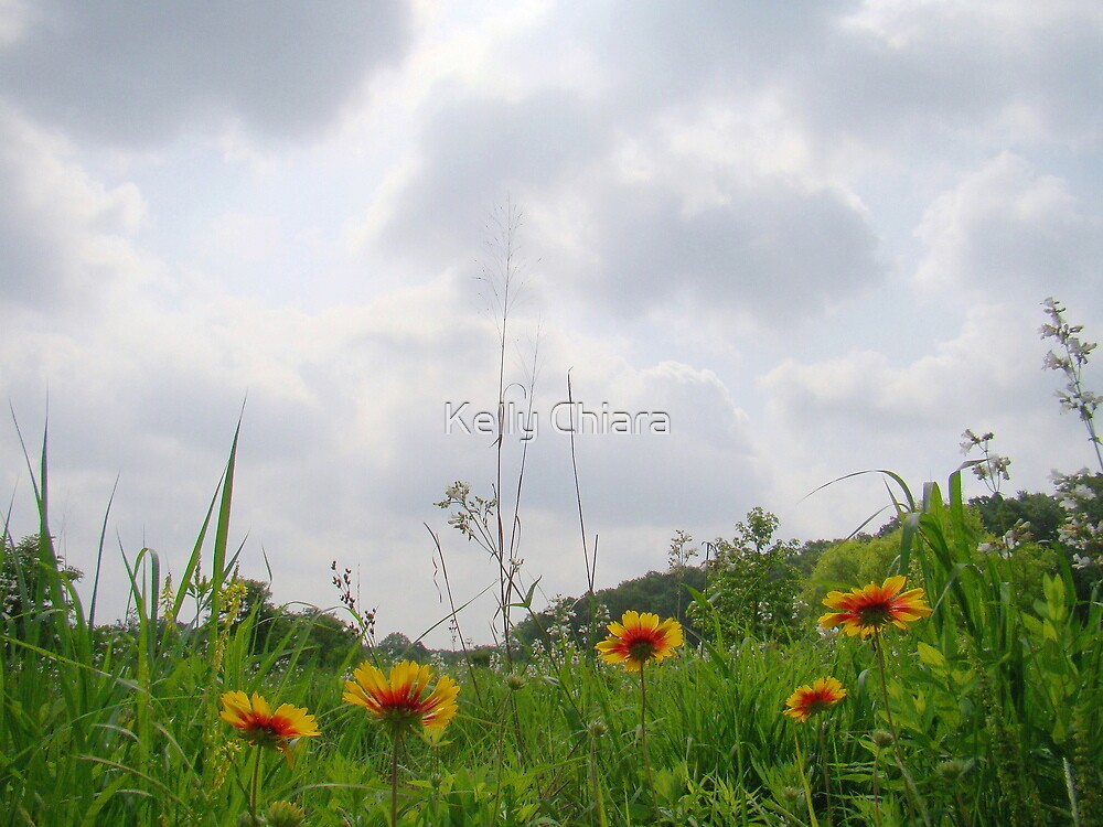Sunshine on a Cloudy Day by Kelly Chiara