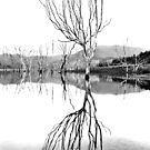 Dusk at Lake Eildon #2 by Jason Green