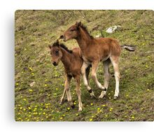 Play fight Canvas Print
