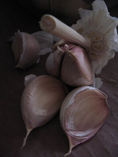 Garlic by KMorral