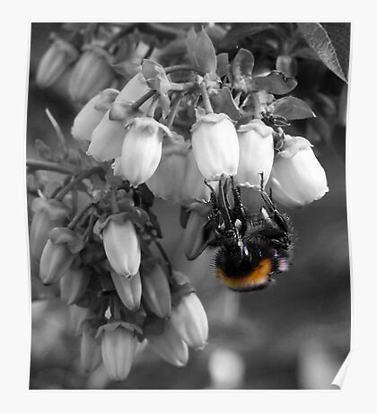 Just The Colour Of The Bee. Poster