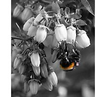 Just The Colour Of The Bee. Photographic Print