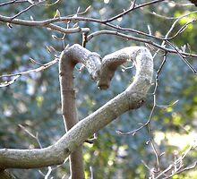 Love Nature by rhian mountjoy