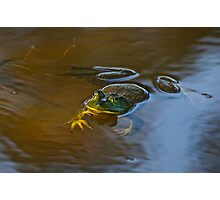 Frog Relaxing Photographic Print