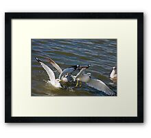 Seagulls in the Water Framed Print