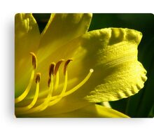 The Yellow Lily Canvas Print