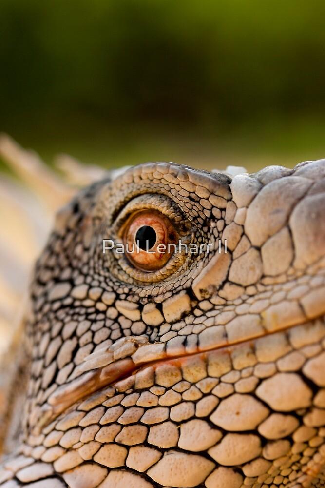 Iguana in Bonaire by Paul Lenharr II