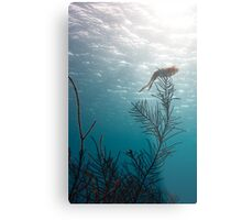 Reef Squid Metal Print