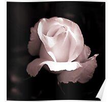 Pink Rose I Poster