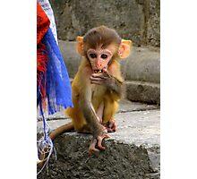 Monkey at Swayambhunath Stupa, Kathmandu Photographic Print