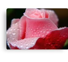 Pink Rose & Water Drops #2 Canvas Print