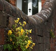 Yellow weed on wall by Stanley Road by Palne