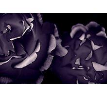 Transcend the Petal Photographic Print