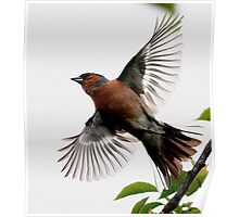 Flight Of The Chaffinch Poster