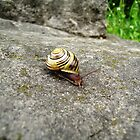 Mr. Snail by Hassan Khan
