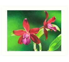 Red cattleya orchid Art Print