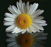 Daisy  by Sean Farragher