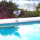 Heron enjoying the pool by ♥⊱ B. Randi Bailey
