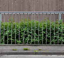 Nettles by barrier by Palne