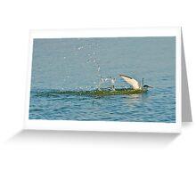 Water Landing Greeting Card