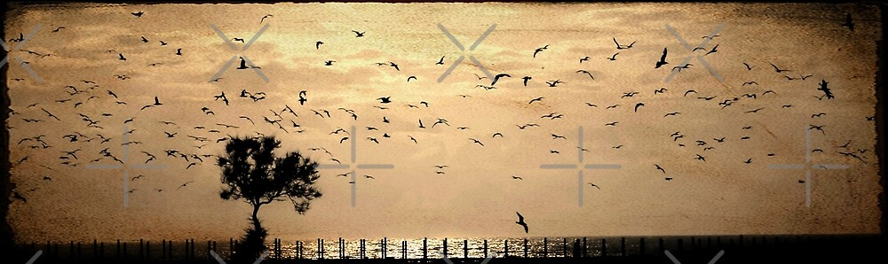 the flock by Ingrid Beddoes