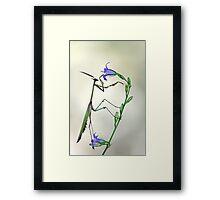 Empusa pennata Framed Print