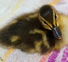 Sture The Mallard #1 by MarianaEwa