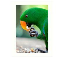 Have a bite - Eclectus parrot Art Print