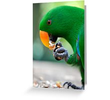 Have a bite - Eclectus parrot Greeting Card