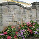 Blooming Hydrangeas by jtalia