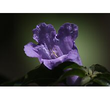 Purple flower 5586 Photographic Print