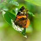 Butterfly or Moth ?  by Elaine  Manley