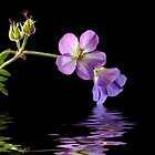 Reflections of Purple by Sheryl Kasper