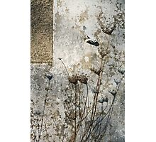 Wall with plants - 2008 Photographic Print