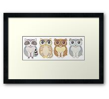 Raccoon Cat Dog Dog Framed Print