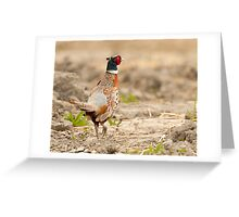 Ring Necked Pheasant: One of My Best Bird Shots Ever Greeting Card