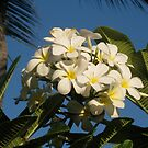 Yellow Plumeria #1 by jtalia