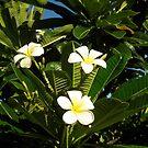 Yellow Plumeria #3 by jtalia
