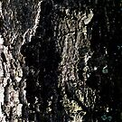 Tree bark abstract in nature by heartyart