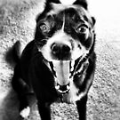 Dog Scream Black and White by Will Ruocco