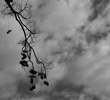 Shoe Tree - Edinburgh Gardens by BreeDanielle